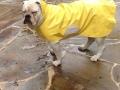 Lulu Rain